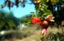 Una isla para comérsela - Ibiza Travel